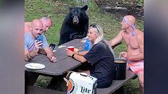 Piknik z niedźwiedziem. Drapieżnik dołączył do rodzinnej imprezy