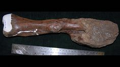 Nowotwory zabijały już w czasach prehistorii. Niezwykłe odkrycie naukowców