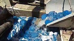 Niebieskie meduzy w izraelskiej elektrowni. Dostały się do systemu chłodzenia