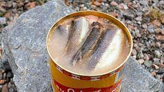 Surströmming- sfermentowane szwedzkie śledzie