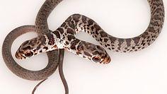 Koci odkrywca. Domowy pupil znalazł niezwykłego węża
