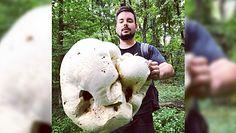 Największe grzyby. Oto prawdziwi rekordziści z lasu