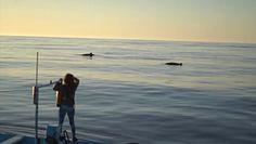 Nowy gatunek wieloryba? Badacze przeprowadzą analizę DNA
