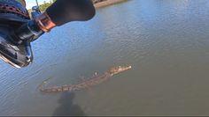 Złowił gigantycznego krokodyla. Wszystko nagrała kamera