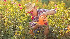 Jak podlewać kwiaty w upalne dni?