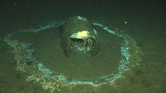 Beczki z dna oceanu. Przerażające odkrycie naukowców w Kalifornii