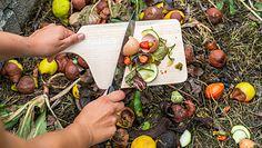 Jak nawozić rośliny? Ekspertka radzi używać naturalnych sposobów
