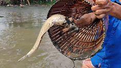 Bez wędki łowią ryby