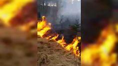 Pożar lasu na Lubelszczyźnie. Leśnicy opublikowali dramatyczne nagranie
