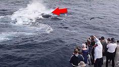 Stado orek kontra wieloryb. Świadkowie nie mogli uwierzyć własnym oczom