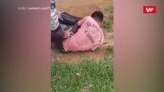 Wielka anakonda kontra człowiek. Przerażające nagranie z Brazylii