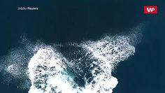 Humbaki podczas sezonu godowego. Piękne wideo z Brazylii