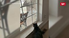 Kiedy jeleń puka do drzwi. Właścicielka chwyciła za telefon