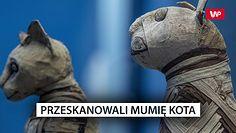 Przeskanowali mumię kota