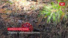 Zasypują polskie lasy. Pierwsza pomoc w razie zatrucia