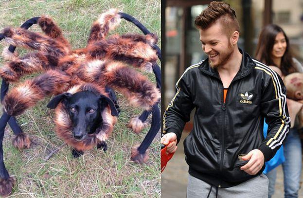 Wardęga zarobił na psie-pająku ponad 400 TYSIĘCY!