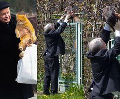 """Jarosław Kaczyński: """"Dzisiaj mamy nowe pokolenie kotów. To są inne koty niż pamiętam z dawnych lat"""""""