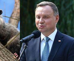 """Andrzej Duda wykazuje znajomość królestwa zwierząt, rozpoznając OPOSA na zdjęciu. Internauci: """"Nie ma pan WAŻNIEJSZYCH RZECZY do roboty?"""""""