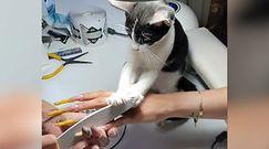 Kot w gabinecie kosmetycznym. To nagranie stało się hitem internetu