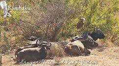 Chciał upolować sobie obiad. Nagranie z Parku Krugera