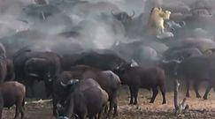 Tragiczny finał polowania. Nagranie z Afryki