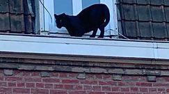 Grasowała po dachach. Teraz nagle zniknęła