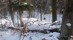 Zimowy spacer na łonie natury. Nagranie z Baligrodu