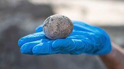 1000-letnie nienaruszone kurze jajo. Sensacyjne odkrycie w Izraelu