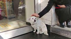 Wierny pies. Czekał pod szpitalem na opiekuna