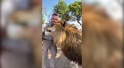 Lew pieszczoch. Król zwierząt i jego opiekun hitem w sieci