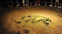 Co zabiło prehistoryczne bestie. Twierdzą, że odkryli przyczynę