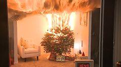 Żywa choinka w domu na Święta. Podlewanie jej ma znaczenie