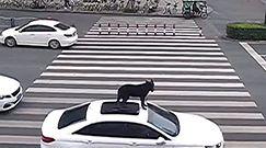 Pasażer na dachu. Nietypowa podróż psa