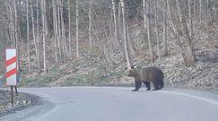 Nieoczekiwany gość na drodze. Nagranie z Bieszczad
