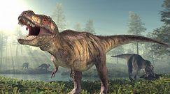 Nowy gatunek dinozaura. Brytyjscy poszukiwacze odkryli kości kuzyna T-Rexa