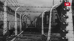 Uratował tysiące więźniów Auschwitz. Józef Bellert. Lekarz i bohater
