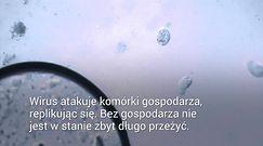 Koronawirus a lato. Zbadają odporność wirusa na ciepło