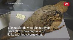 Znaleźli 6 mln mumii sprzed prawie 2,5 tys. lat. Wreszcie poznali ich tajemnicę