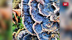 Niesamowite kolory grzybów. Nadleśnictwo Zamrzenica dzieli się pięknymi zdjęciami