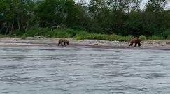 Grzegorz Krychowiak obcuje z dziki niedźwiedziami na Kamczatce