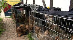Łomianki: Psy przetrzymywane w strasznych warunkach