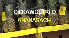 Tak poznasz, że ananas jest słodki