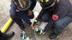 Niecodzienna reanimacja. Strażacy ratowali kota