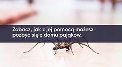 Mięta na pająki. Jak zrobić mieszankę?