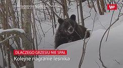 Dlaczego Grzesiu nie spał. Kolejne nagranie leśniczego z Polanek