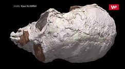 Zeskanowali czaszkę sprzed 20 mln lat. Musieli przyznać się do pomyłki