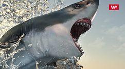 Zdechł 6 mln lat temu. Spacerowicz przypadkiem odkrył jego... ząb