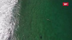 Niebezpieczne surfowanie. Nagranie z drona