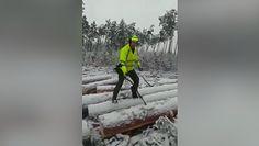 Las pełen skarbów. Leśnicy z Borów Tucholskich pokazali wideo