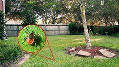 Jak pozbyć się kleszczy z własnego ogrodu? Oto kilka naturalnych, sprawdzonych sposobów